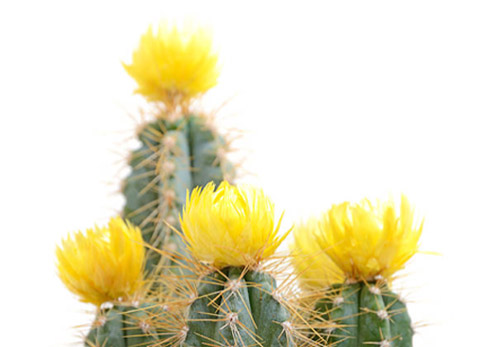 Cactus Direct Cremation Mesa AZ